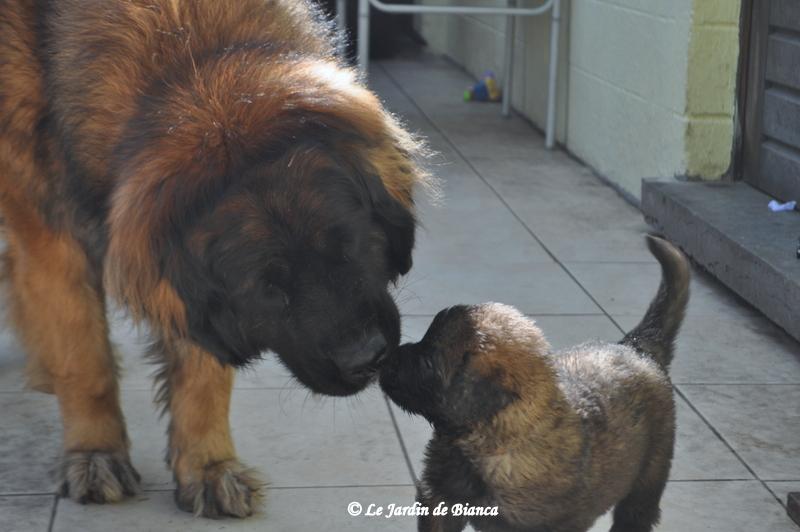 Maman et son garçon collier marron