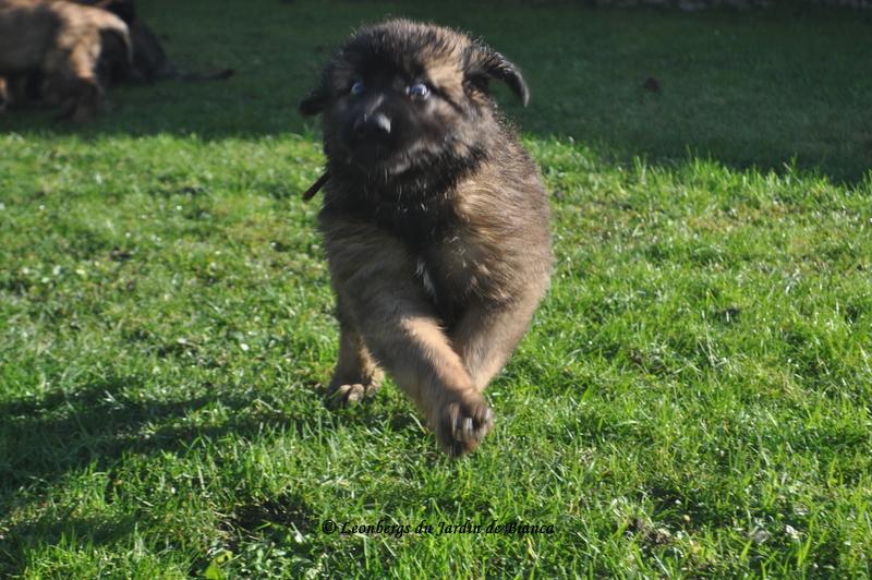 Max en pleine course :-)