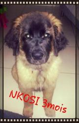 Nkosi 3 mois 3